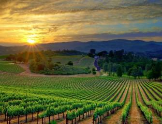 Alemania y Reino Unido, principales importadores de vino español