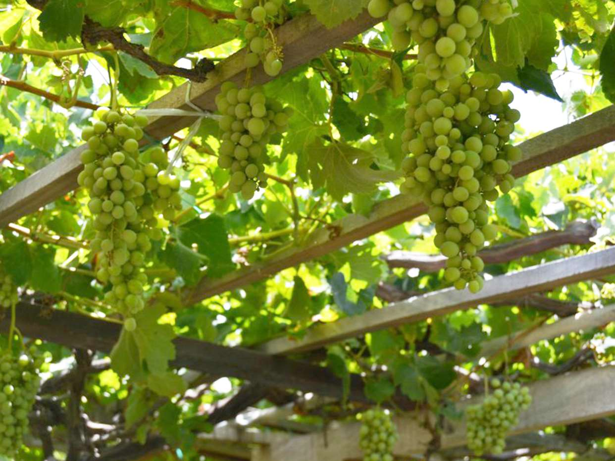 señorio-de-aguimes-vinos-de-gran-canaria-masmediacanarias-4
