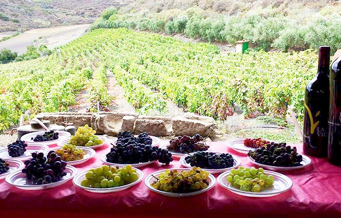 vinos-de-gran-canaria-plaza-perdida-10