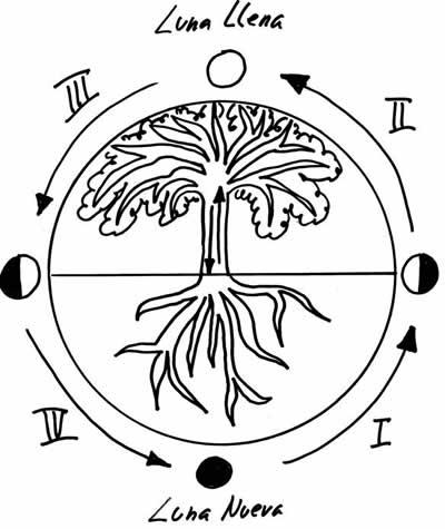 vinos-de-gran-canaria-ciclos-lunares