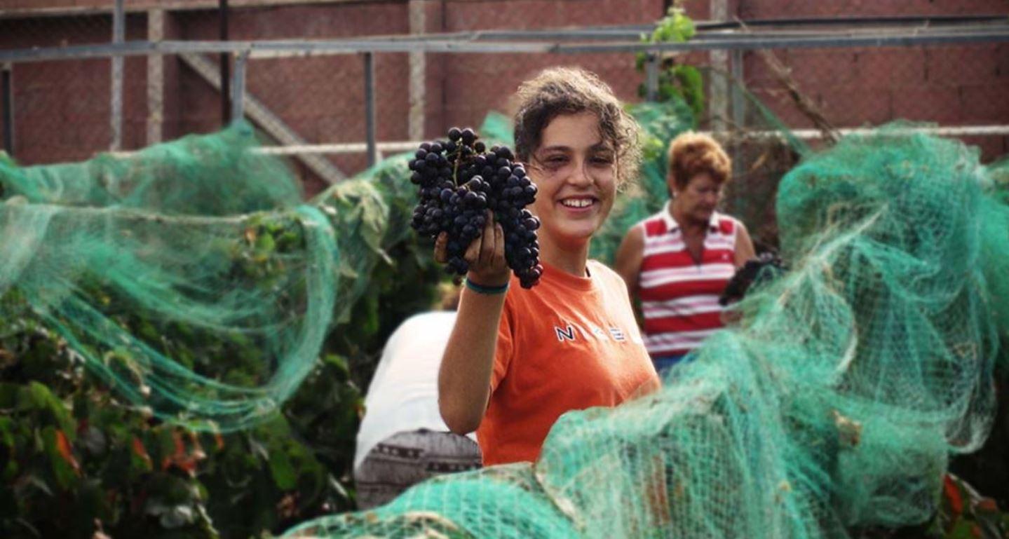 vinos-de-gran-canaria-vegadegaldar-masmediacanarias-231