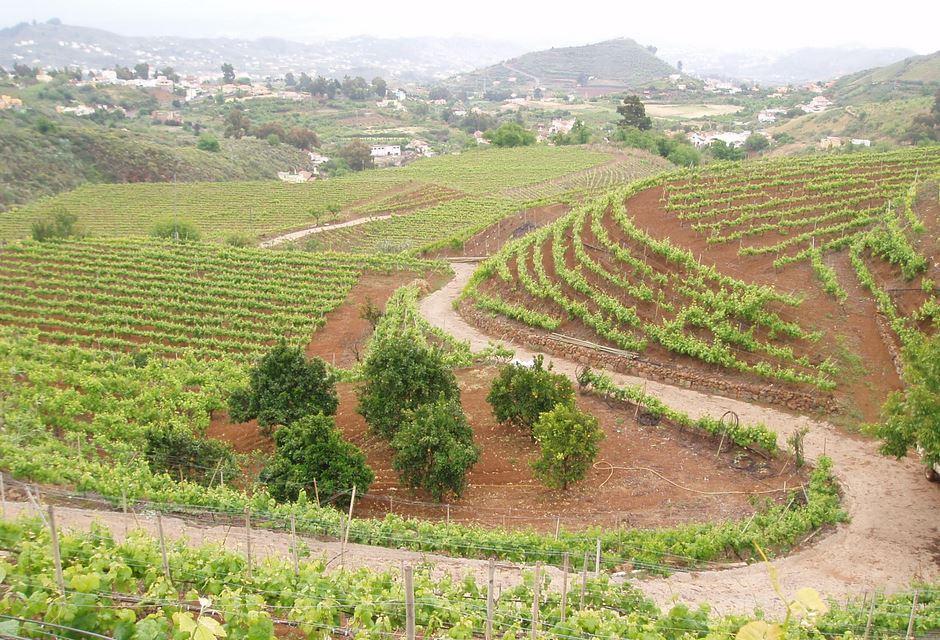 Bodega Frontón de Oro - Vinos de Gran Canaria