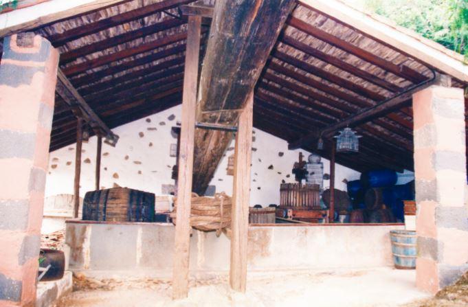 vinos-de-gran-canaria-bodegas-montealto-21