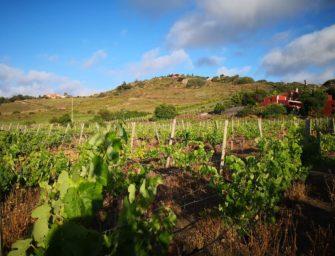 Los paisajes del vino de Gran Canaria y la conservación del territorio