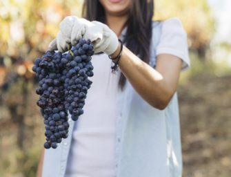 Los jóvenes canarios podrán innovar en el sector vitivinícola acogiéndose a las ayudas del Gobierno de Canarias