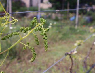 La venta online de vinos reclama Denominación de Origen Gran Canaria